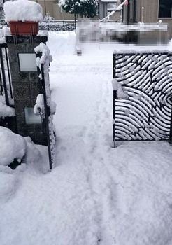 10175 雪202012-2.JPG