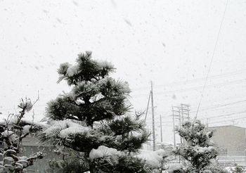 5518-2 雪201701-02.jpg