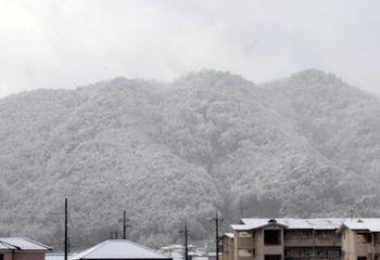 7956 雪201901-01.JPG