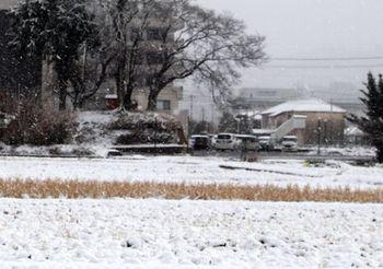 7957 雪201901-02.JPG