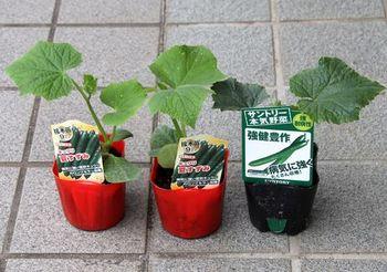 9447 野菜苗202005-04.JPG