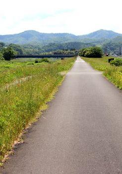 9496 散歩202005-4.JPG